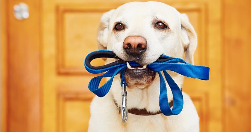 Coleira: saiba como escolher a melhor para seu pet