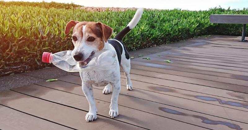 Cuidados com brinquedos caseiros para seu cão