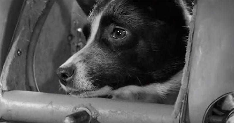 A História de Laika, a Vira-Lata Soviética Enviada ao Espaço: Por Que Foi Cruel