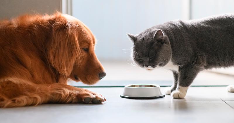 Aprenda a Evitar que o Cachorro Coma a Ração do Gato