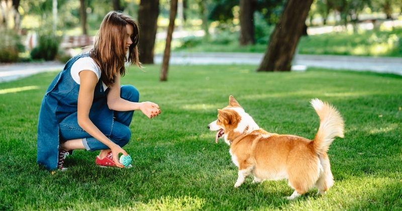 5 lugares ao ar livre para passear com seu cachorro em São Paulo