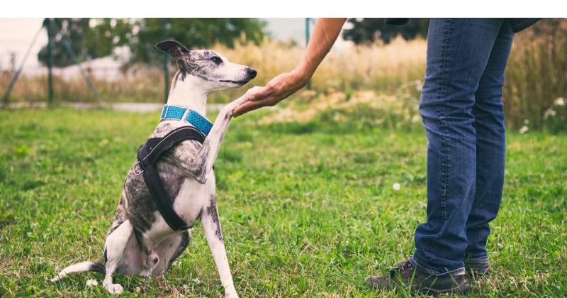 Adestramento de pet: principais acessórios
