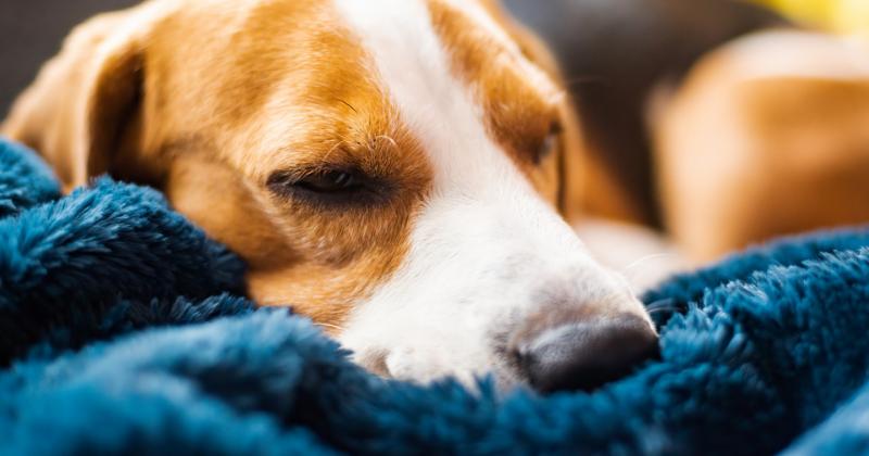 Cistite em cães: uma inimiga silenciosa