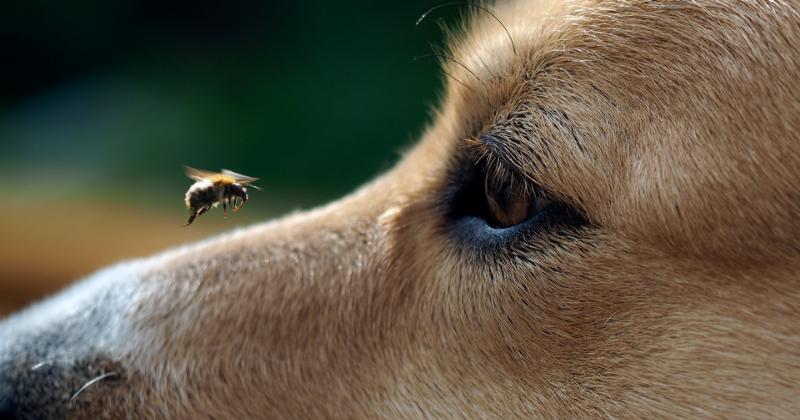 Picada de aranha e abelha em pet: saiba o que fazer