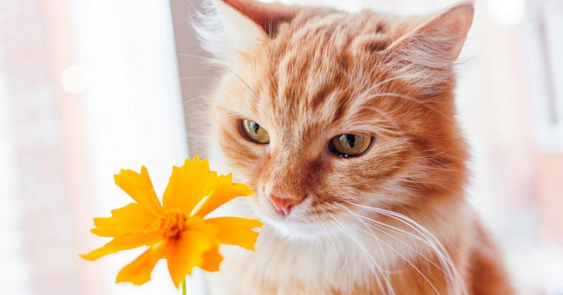 5 cuidados com os pets durante a primavera