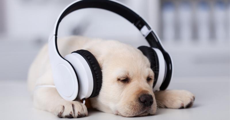 Fonofobia: seu cachorro tem medo de barulho?