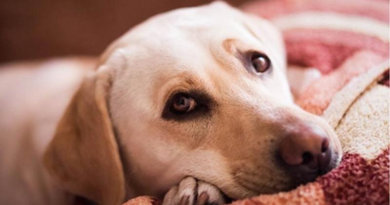 Depressão canina: como identificar e tratar